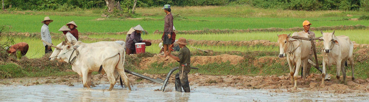 Farmers working in the fields in Cambodia.