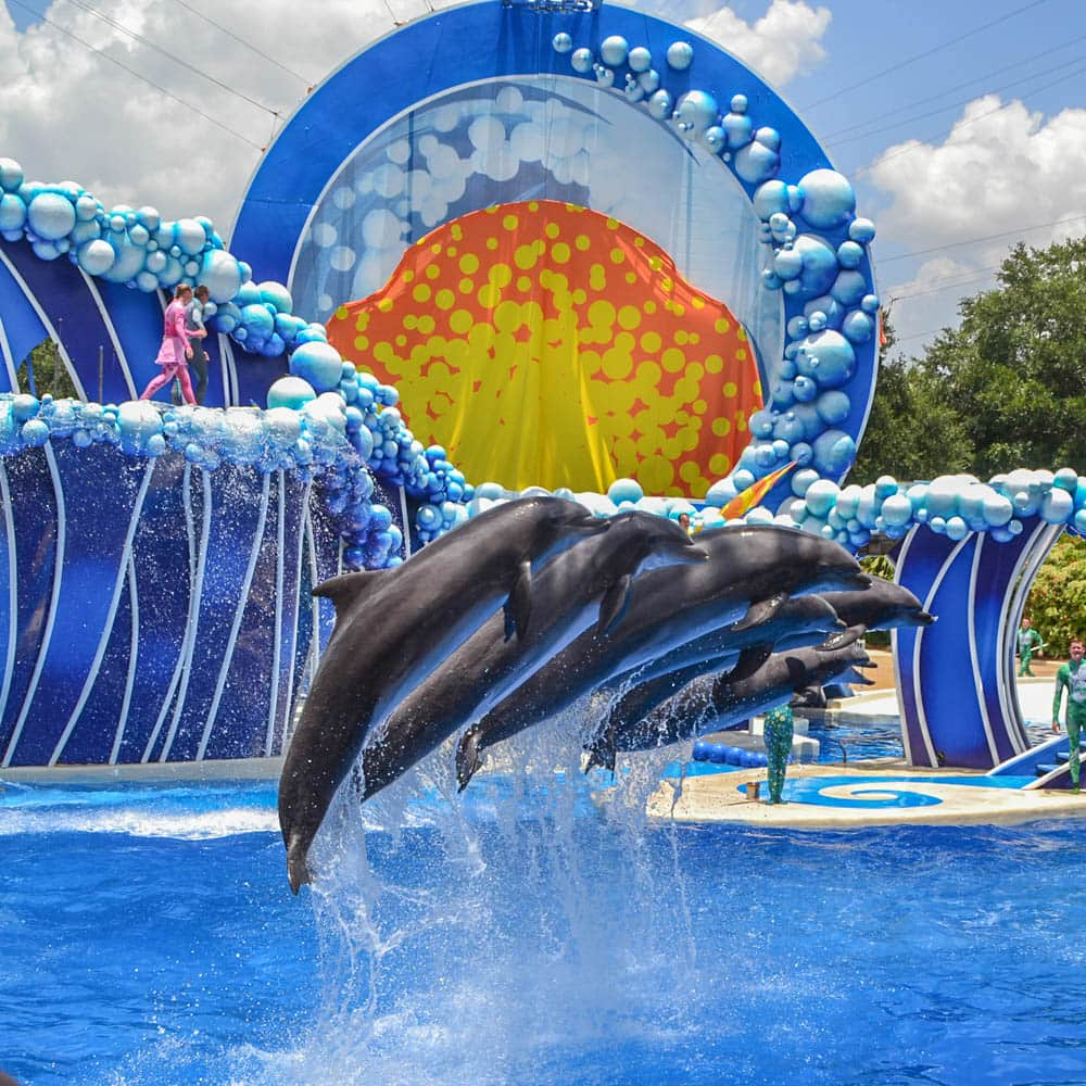Check Out Sam Travel Guide And Info About Orlando Usa