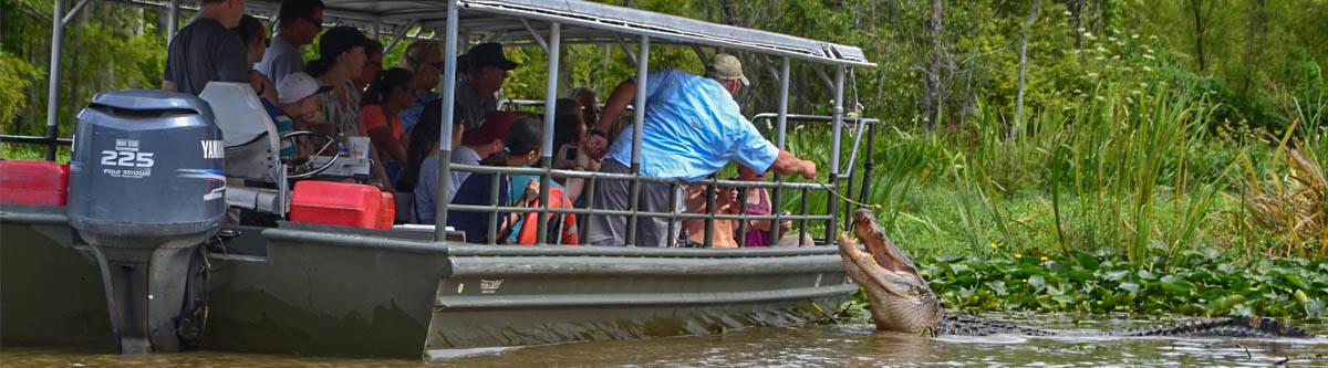 New Orleans aligator