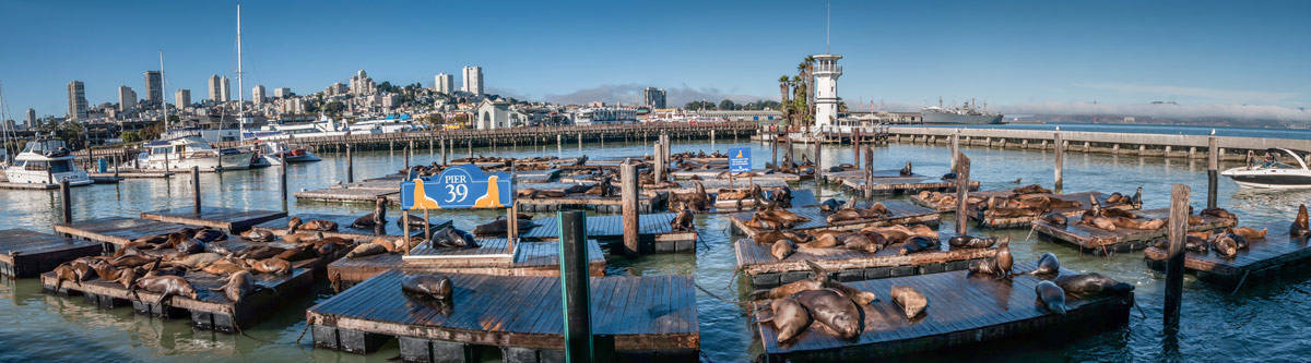 Pier 39, filled with sea lions.