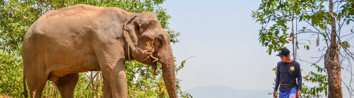 ethisch olifanten toerisme Thailand