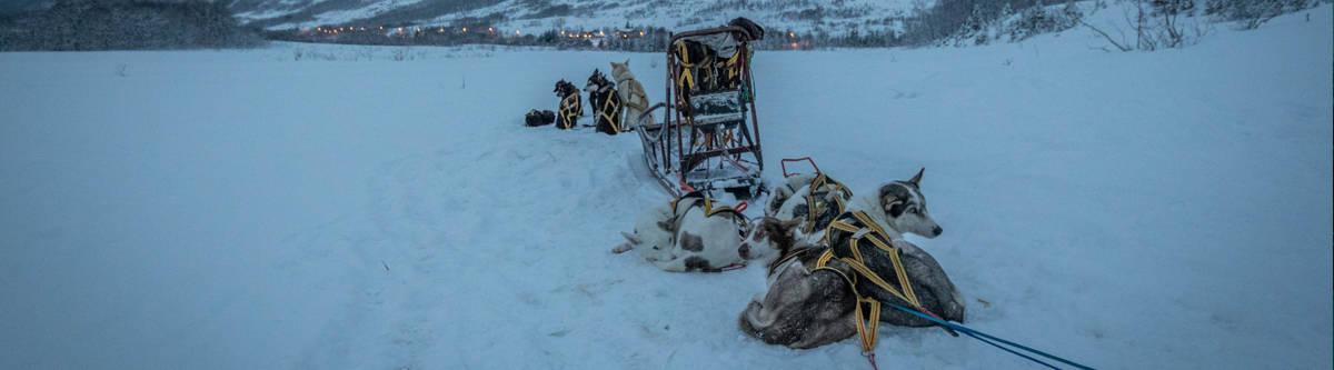 Tromso husky sledetocht