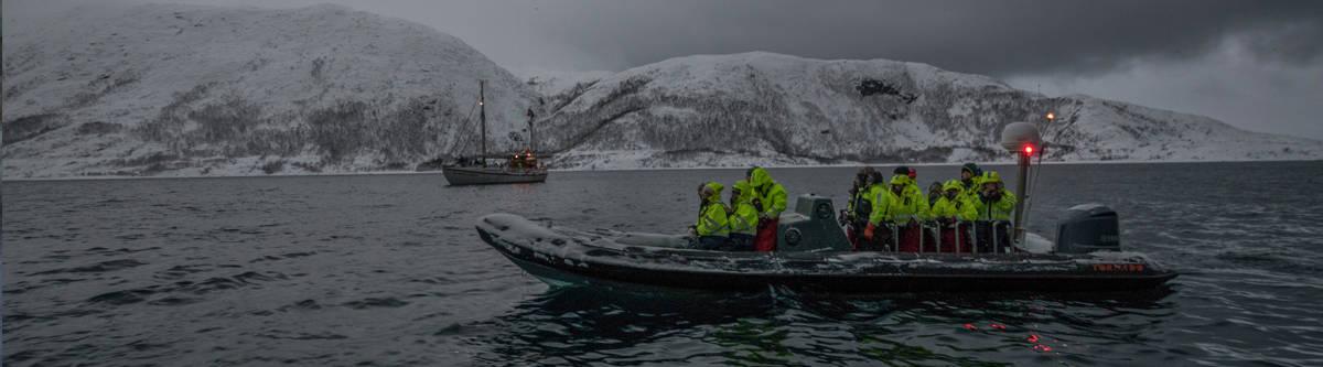 Tromso walvissen Noorwegen
