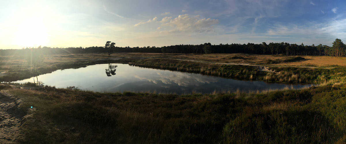 The 'Utrechtse Heuvelrug'. A huge national park in Holland.