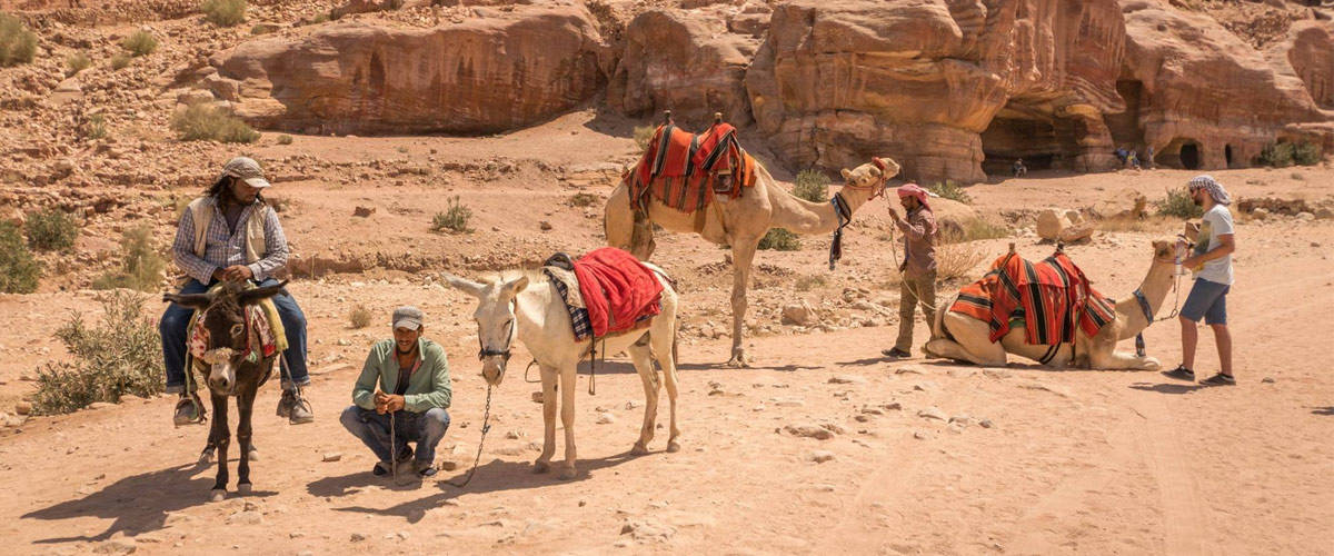 Camels and donkeys are the only form of transportation in Petra!
