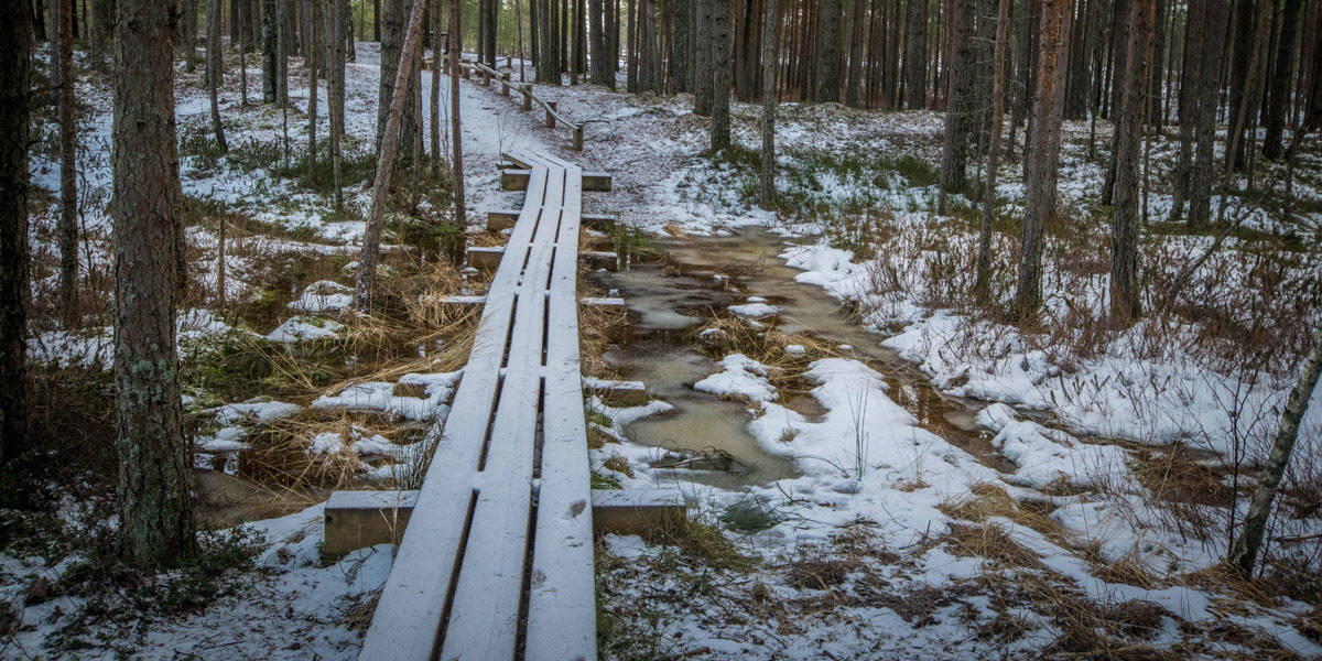 The path to the kemeri bog!