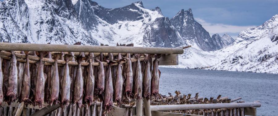 stockfish lofoten