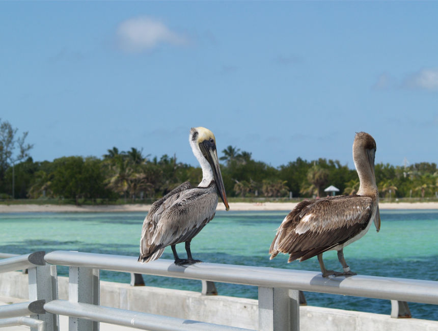 things to see in florida: key west