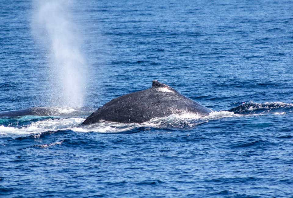 whale watching norway summer
