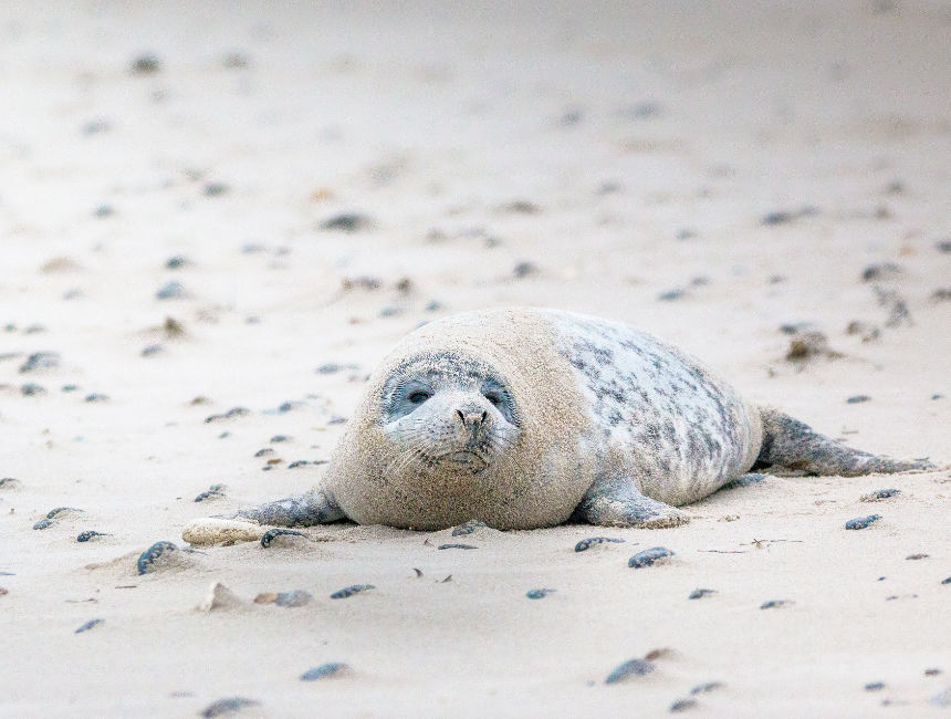seals national park schiermonnikoog