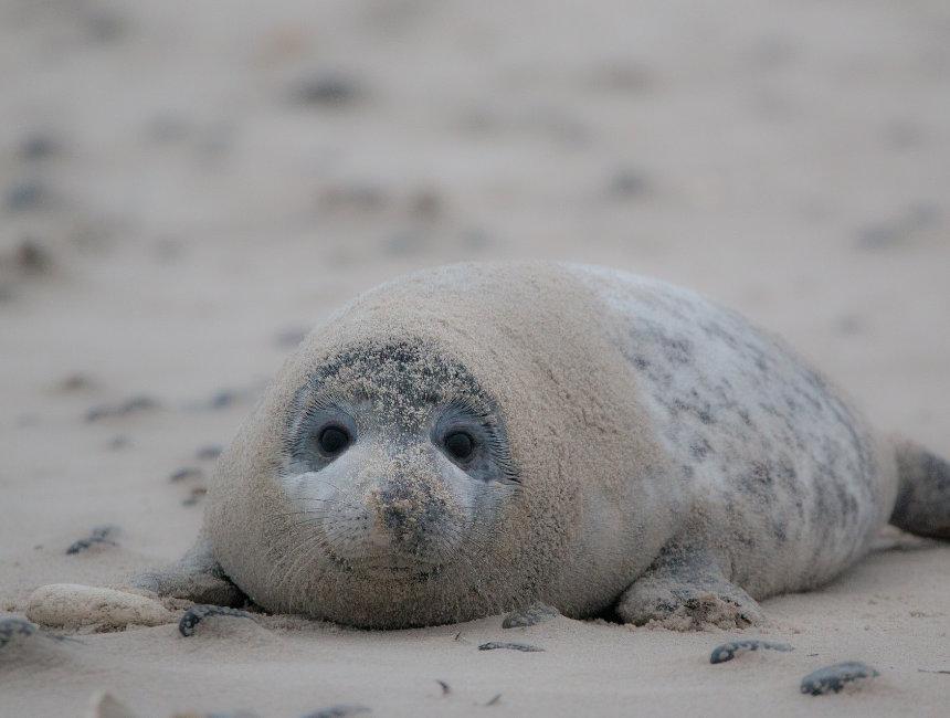 seals schiermonnikoog wadden islands