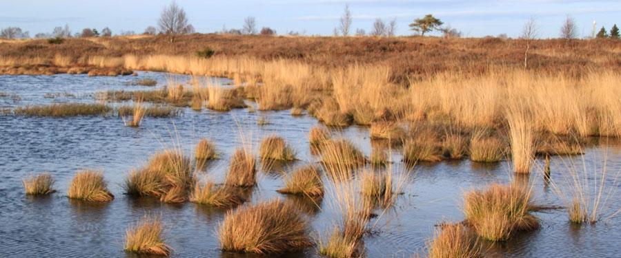 belgium dunes polder grasses