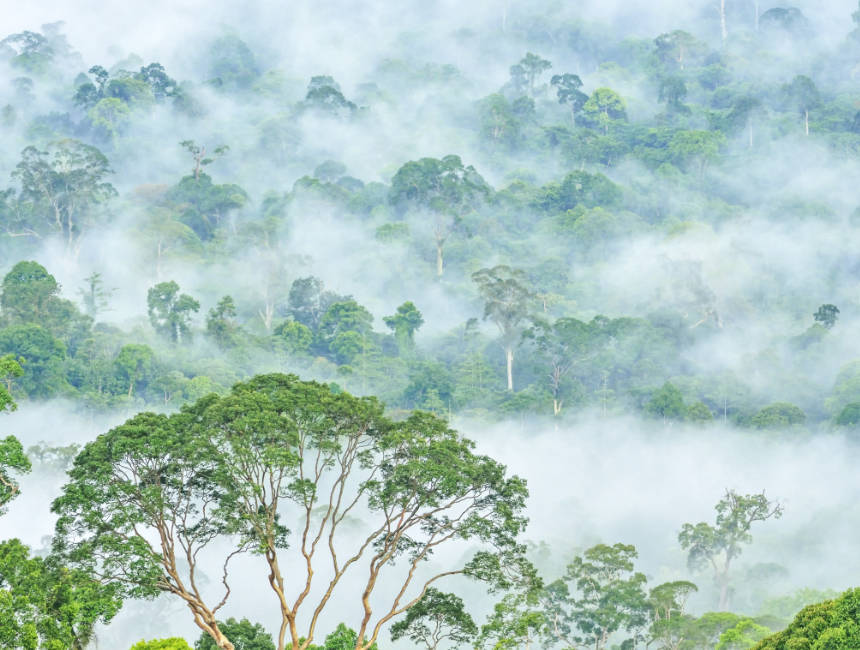 danum valley malaysia things to do