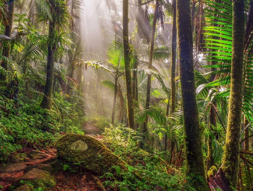 el yunque rainforest tourist attractions puerto rico