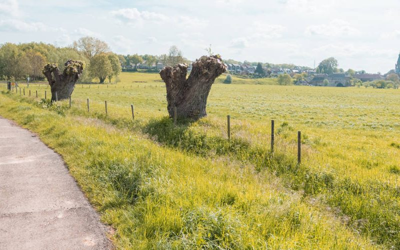 cycling limburg netherlands