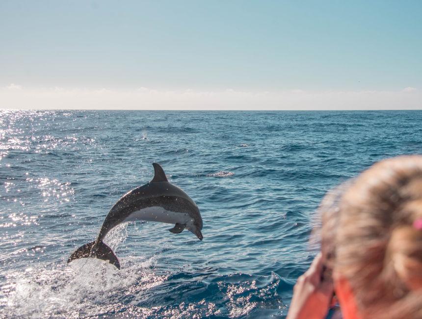 dolphins madeira