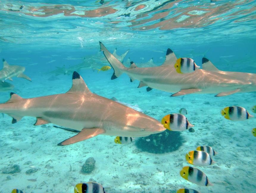 sharks diving destinations