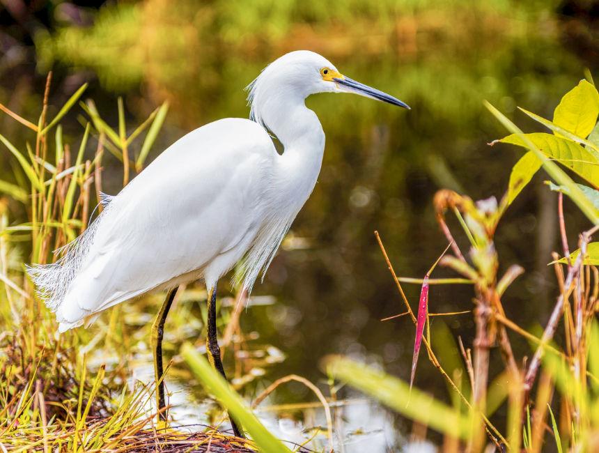visiting everglades national park bird