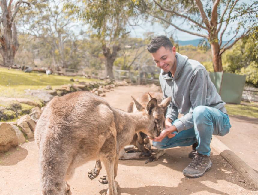 australia wildlife sanctuary