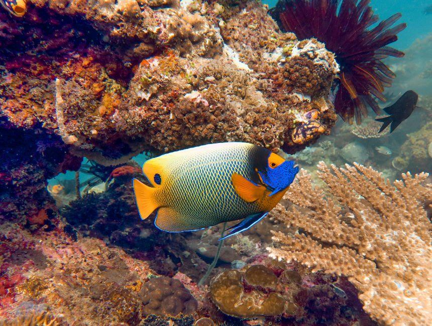 great barrier reef diving australia things to do