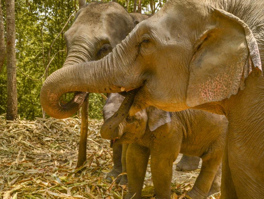 elephant park thailand