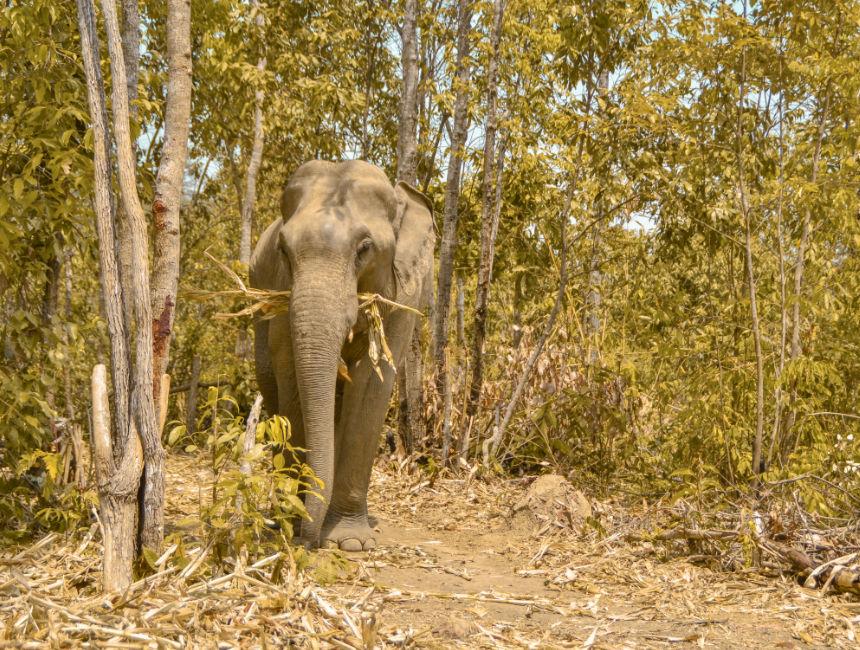 elephant reserve thailand
