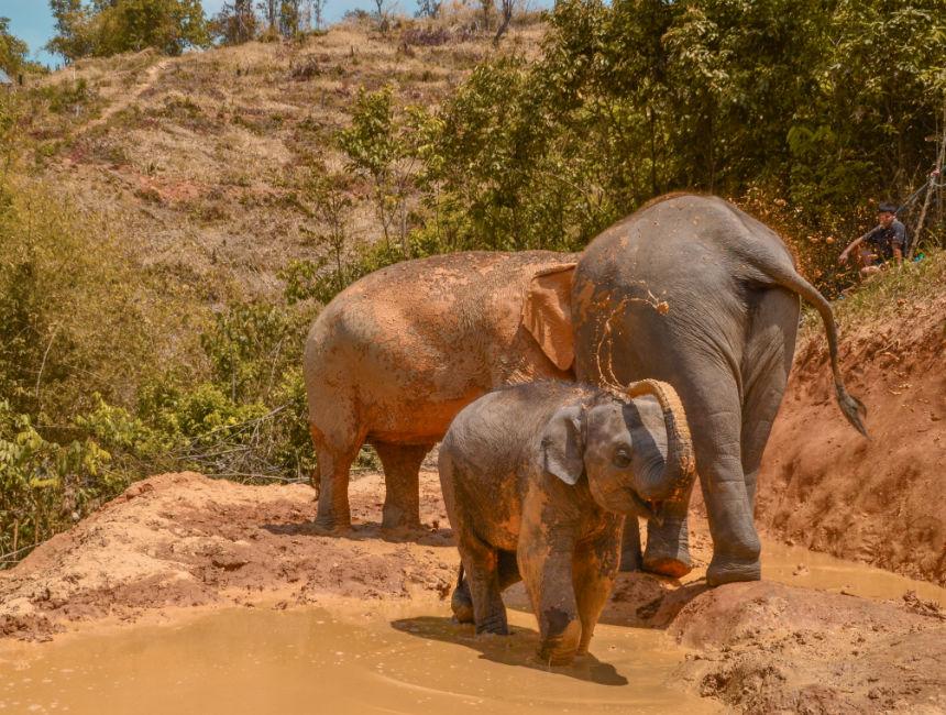 elephants thailand tour