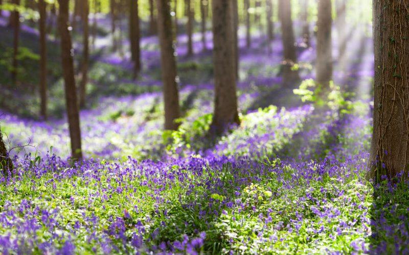 blue forest Belgium