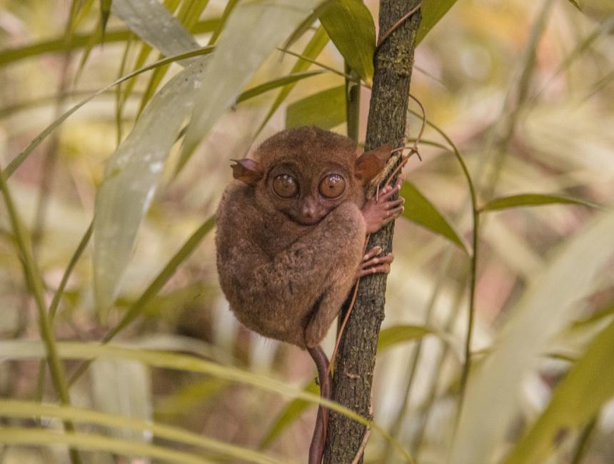 tarsier sanctuary what to do in bohol