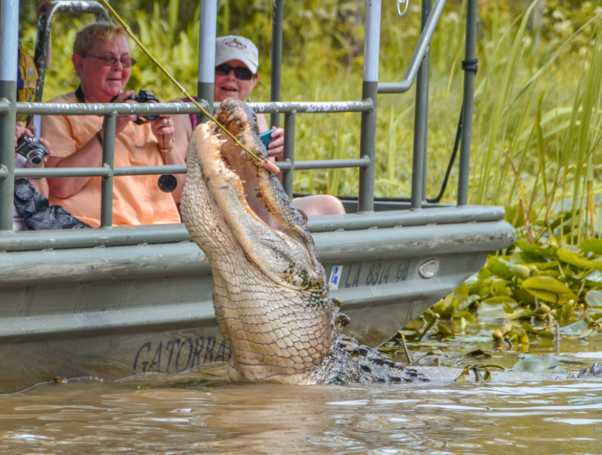 NOLA swamp boat tour