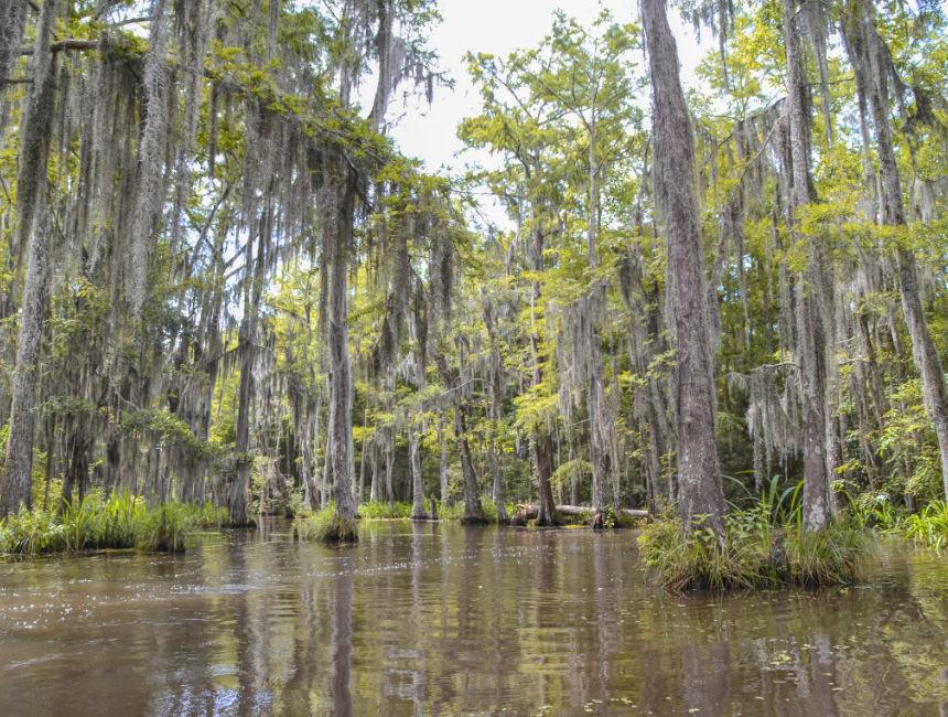 bayou swamp tour new orleans