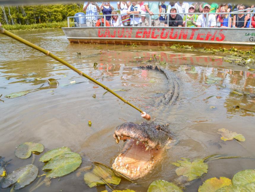 swamp tours Louisiana