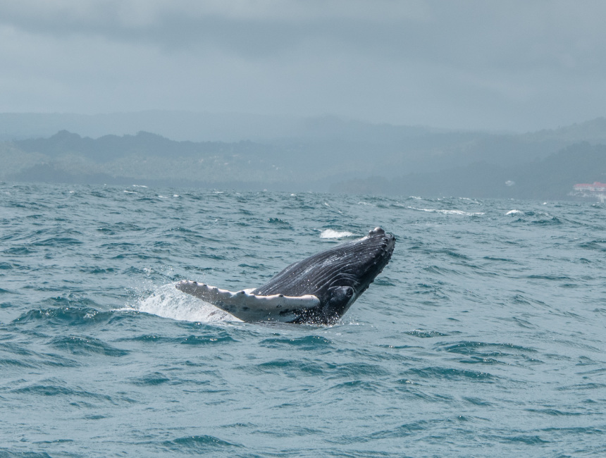 samana whale watching excursions