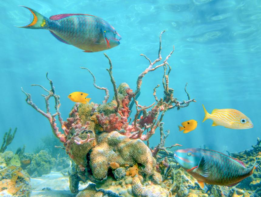 snorkel tour dominican republic