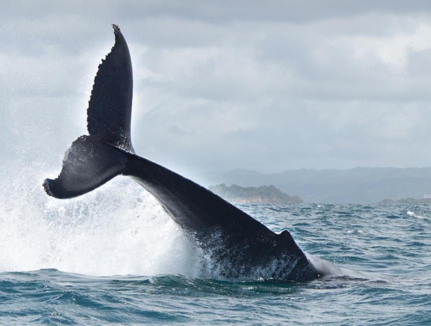 Dominican Republic whale tours