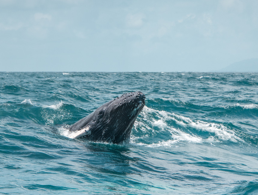 whale tours Dominican Republic