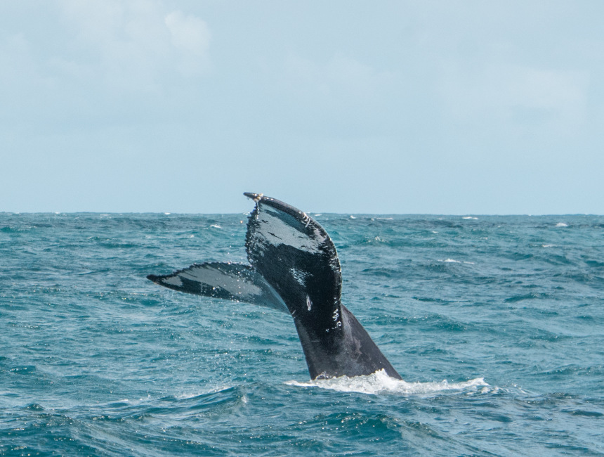 whale watching tours Dominican Republic