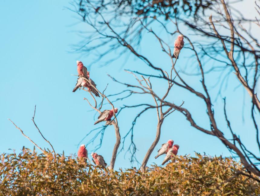 kangaroo island things to do wildlife birds