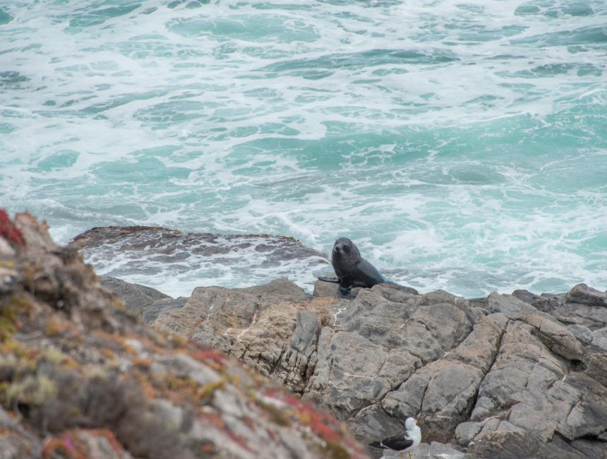 sea lions australia kangaroo island flinders chase national park