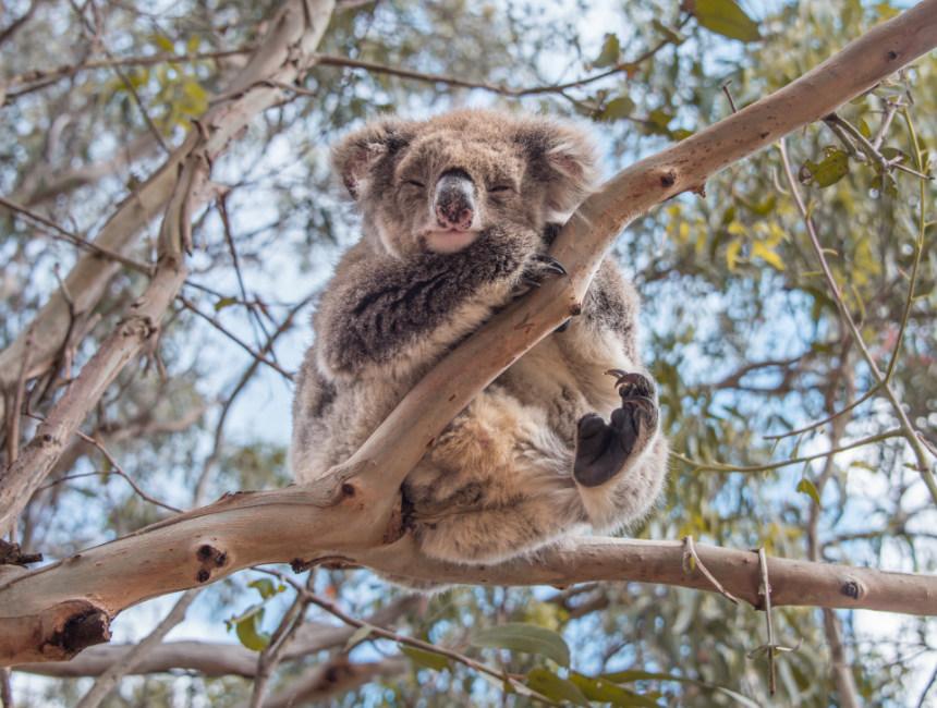 what to do on kangaroo island