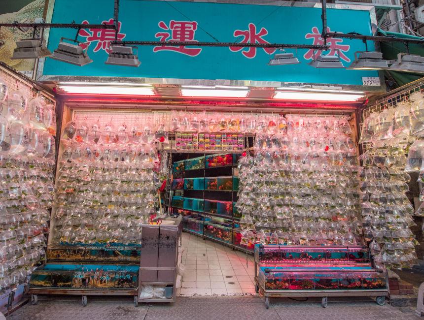 goldfish market hong kong things to do