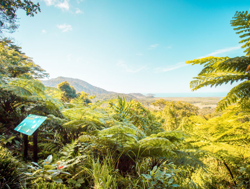 daintree rainforest what to see in australia