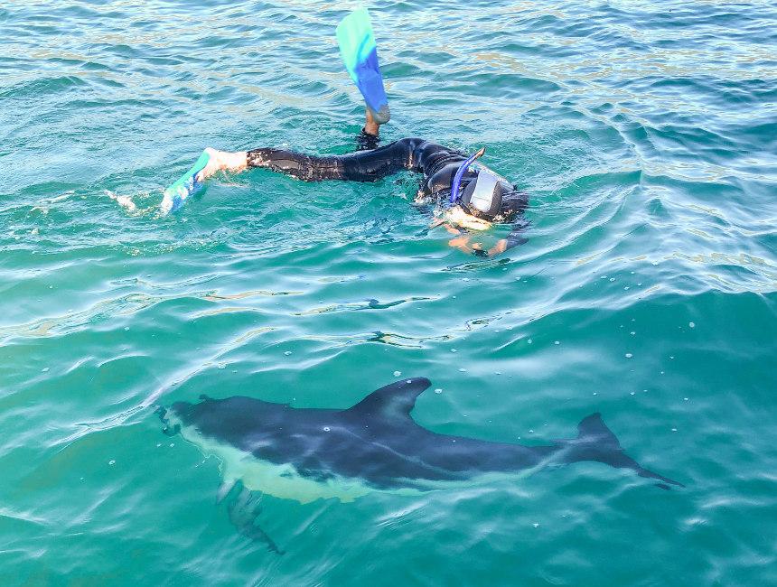 new zealand swim with dolphins