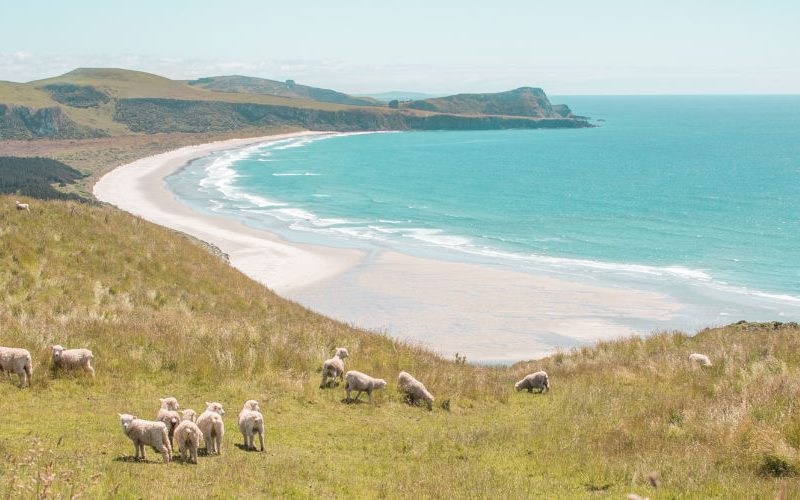 things to see in new zealand