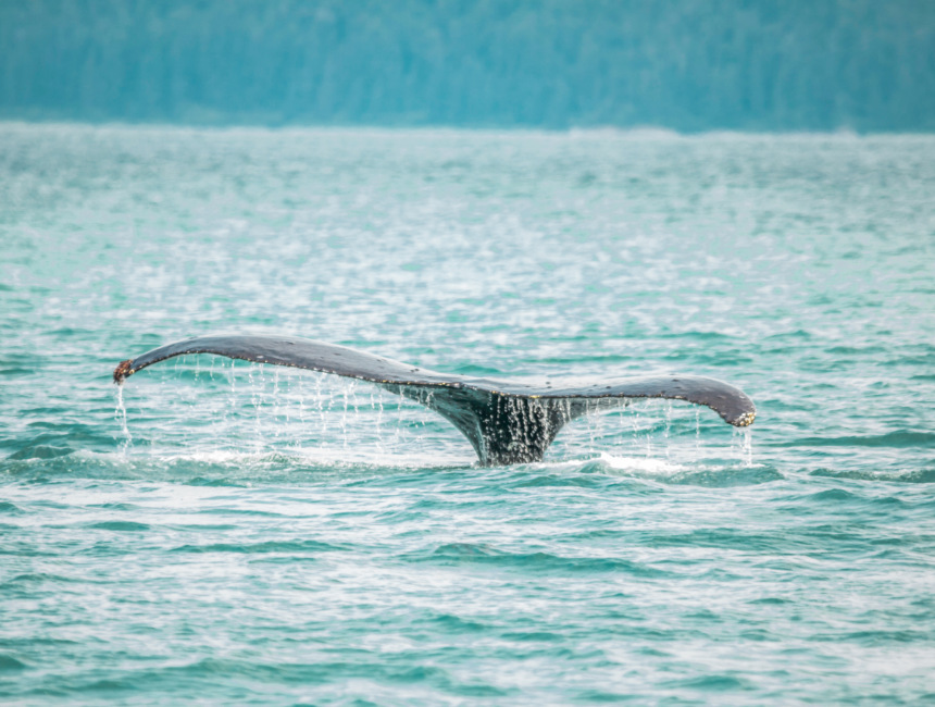 whales new zealand highlights