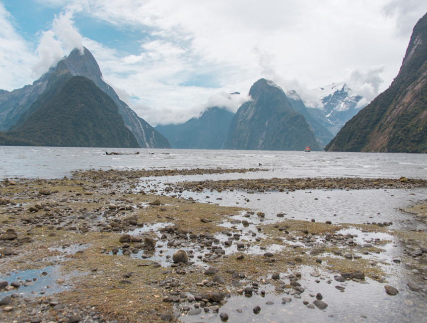 what to do in new zealand milford sound