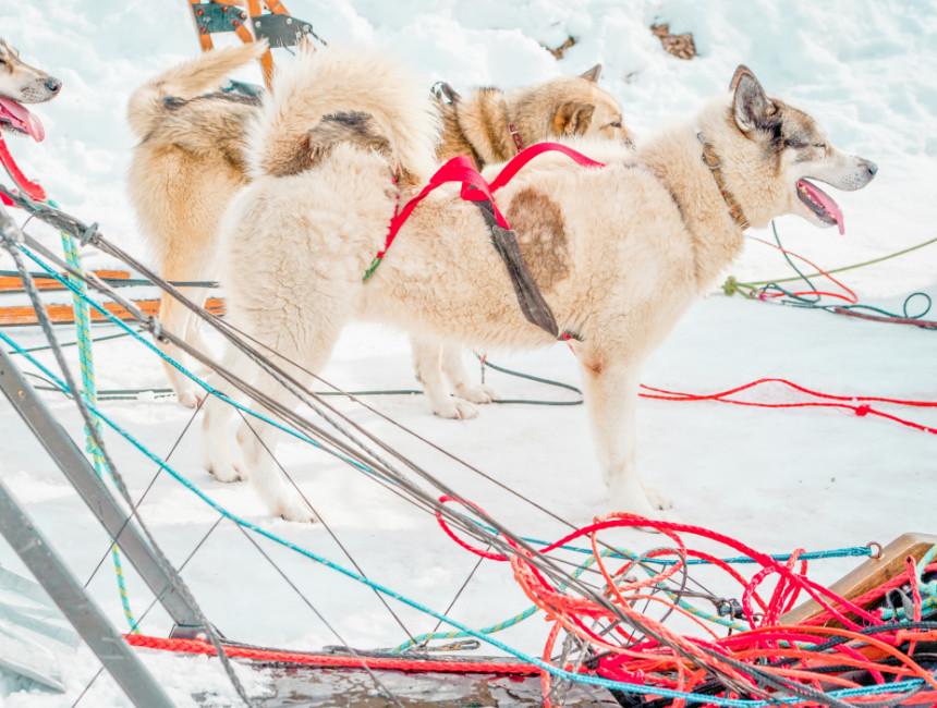 valmeinier husky sledding