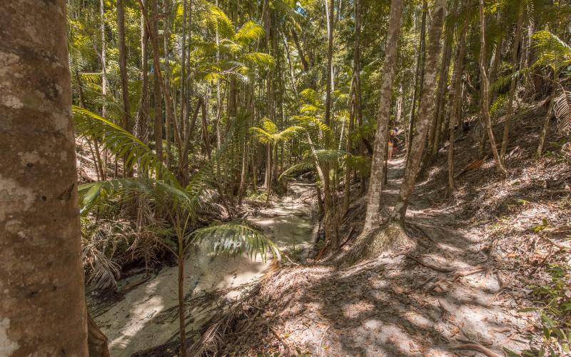 rainforest fraser island jungle